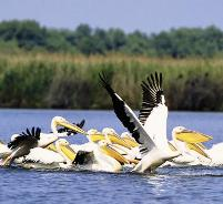Danube Delta-Sightseeing in Romania